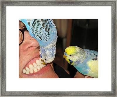 Parakeet Dentists Framed Print by Kimberly Mackowski