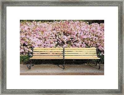 Framed Print featuring the photograph Park Bench And Azaleas by Bradford Martin