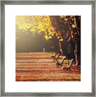 Park Benches In Fall Framed Print by Julia Davila-Lampe