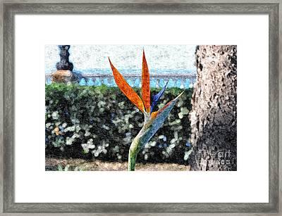 Park Flower Framed Print by Slavi Begov