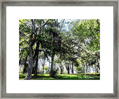 Park Trees Framed Print by Lisa  Ridgeway