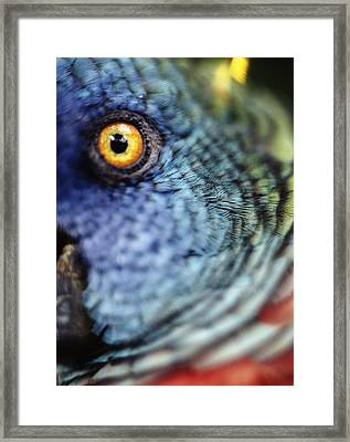 Parrot, Close Up Framed Print by Axiom Photographic