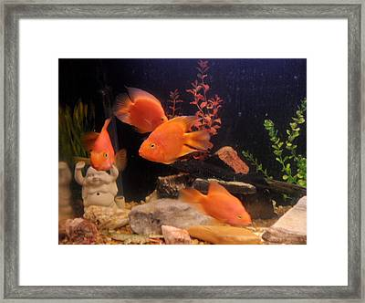 Parrot Fish Framed Print by Val Oconnor