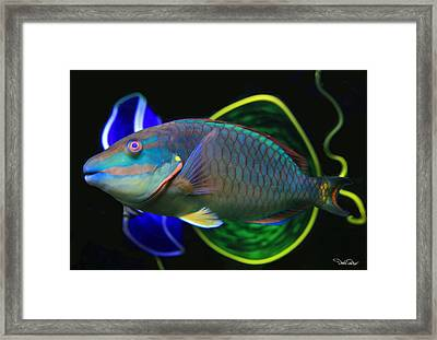 Parrot Fish With Glass Art Framed Print by David Salter