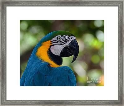 Framed Print featuring the photograph Parrot Head by Art Whitton