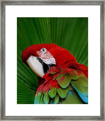 Parrot Head Framed Print by Skip Willits
