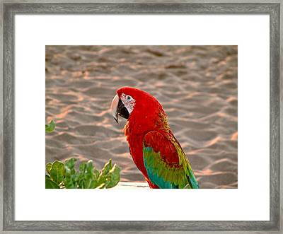 Framed Print featuring the photograph Parrot In Maui by Rob Green