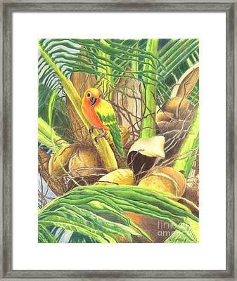 Parrot In Palm Framed Print by Norma Gafford