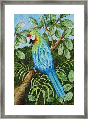 Parrot Framed Print by Katherine Young-Beck