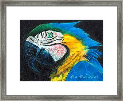 Framed Print featuring the drawing Parrot Miniature by Ana Tirolese