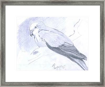 Parrot Framed Print by Poornima M
