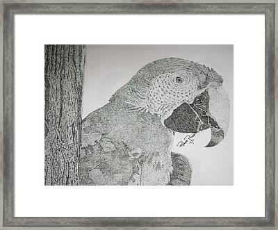 Parrot Framed Print by Robert Plopper