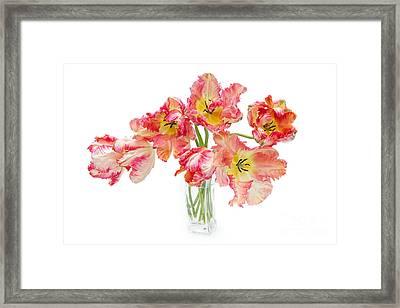 Parrot Tulips In A Glass Vase Framed Print by Ann Garrett