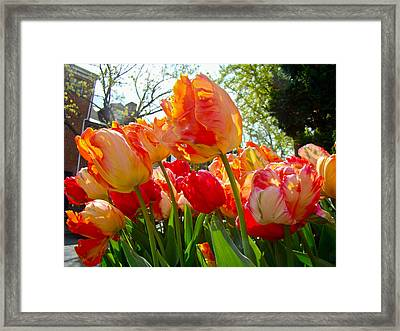 Parrot Tulips In Philadelphia Framed Print