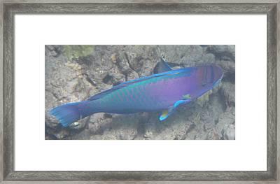 Framed Print featuring the digital art Parrotfish by Erika Swartzkopf