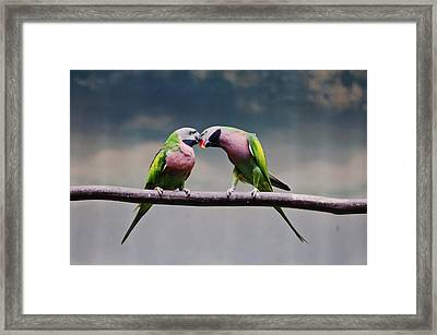 Parrots Framed Print by Ngkokkeong Photography