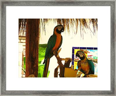 Framed Print featuring the photograph Parrots Of Penasco by Rand Swift