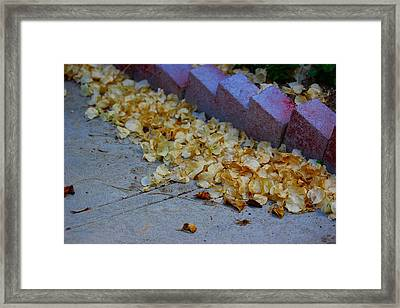 Parting Thoughts Framed Print