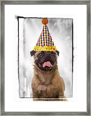 Party Animal Framed Print by Edward Fielding