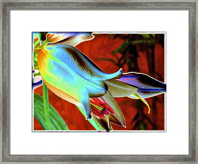 Party Lily Closd Framed Print