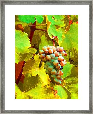 Paschke Grapes Framed Print by Kathy Corday