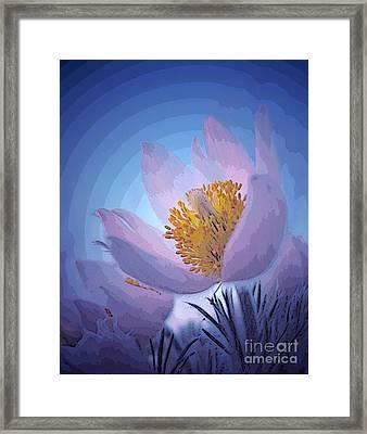 Pasque Flower Framed Print by Vivian Christopher