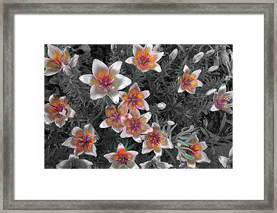 Pasqueflower In Silver Framed Print