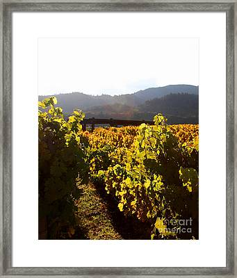 Passage Through The Old Vineyard Framed Print by Wingsdomain Art and Photography