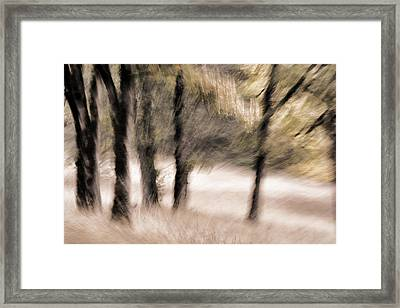 Passing By Trees Framed Print