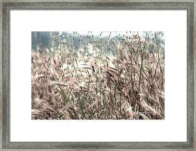 Passing Without Notice Ll Framed Print by Hideaki Sakurai