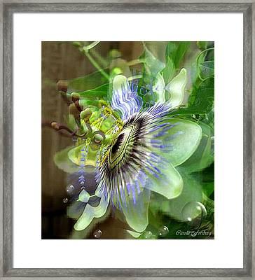 Passion Framed Print by Carola Ann-Margret Forsberg