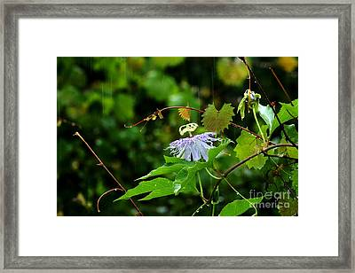 Passion Flower In The Rain Framed Print by Theresa Willingham