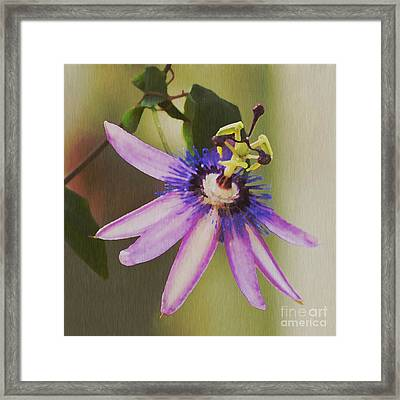 Passion Flower Framed Print by Artist and Photographer Laura Wrede