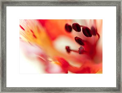 Passion For Flowers. Flamboyant Blossom  Framed Print by Jenny Rainbow