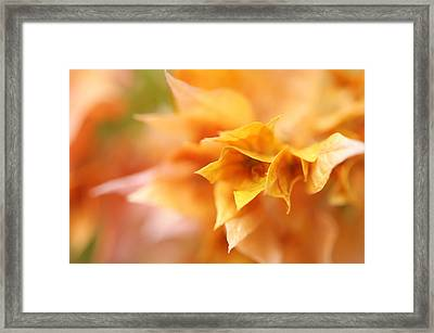 Passion For Flowers. Orange Delight Framed Print by Jenny Rainbow
