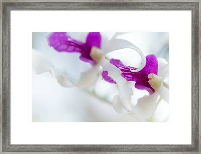 Passion For Flowers. Two Framed Print