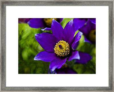 Passion For Purple Framed Print