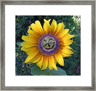 Passion For The Sun Framed Print by Eric Kempson