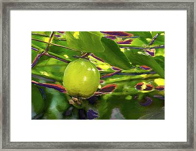 Passion Fruit Framed Print by Miguel Pumarejo