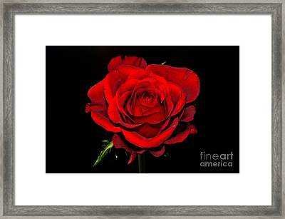 Passion Framed Print by Pravine Chester
