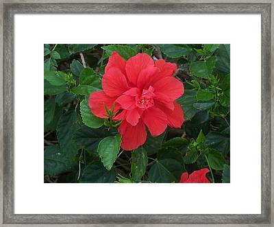 Framed Print featuring the photograph Passion by Sheila Silverstein