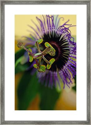Passionate Flower Framed Print by Kathy Yates