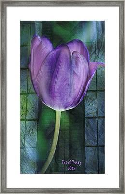 Passionate Purple Framed Print by Trish Tritz