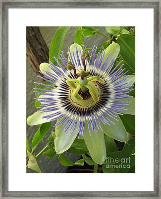 Framed Print featuring the photograph Passionate by Tina Marie