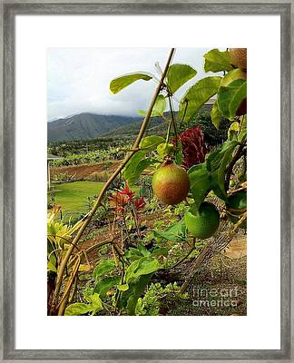 Passionfruit On The Vine With A View Of The Valley   Maui Framed Print by J R Stern