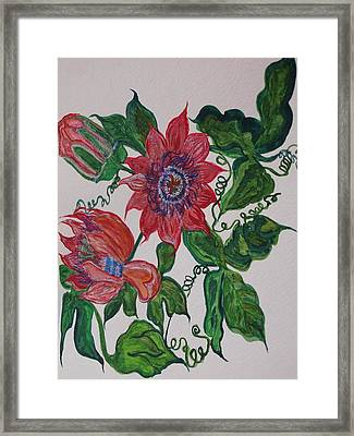 Passyflor Framed Print