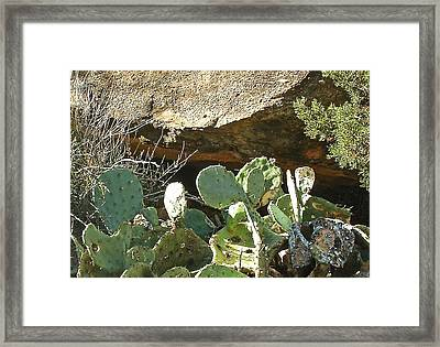 Framed Print featuring the photograph Past Red Creek by Louis Nugent