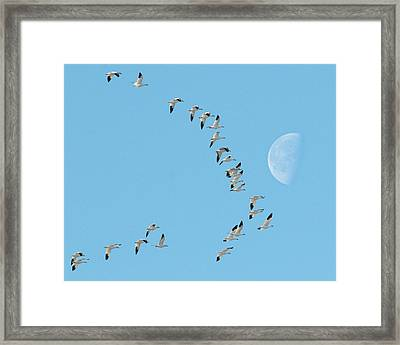 Past The Moon Framed Print