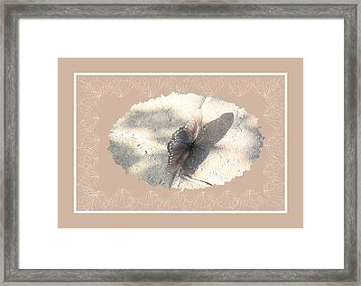 Pastel Butterfly Framed Print by Rosalie Scanlon
