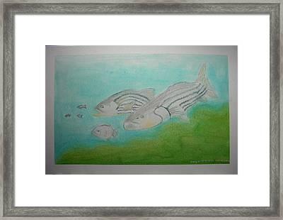 Pastel Fish Framed Print by Maya M
